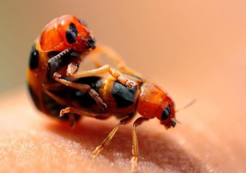 bug-maiting
