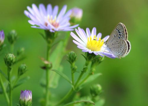 butterfly-scape
